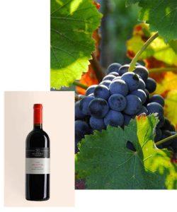 recantina-castelfranco-veneto-igt-vitvinicola-manera-vendita-produzione-vino